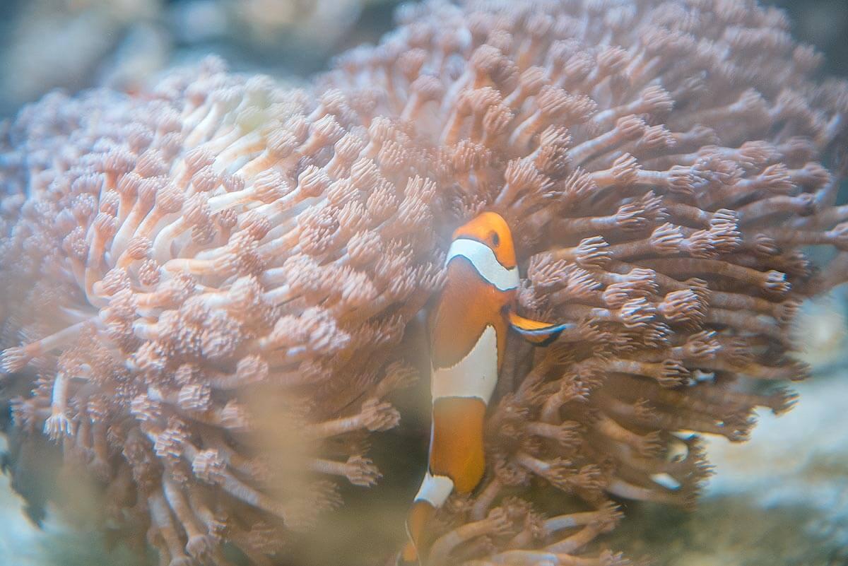Meerwasser-Aquarium Strahlentherapie Ostalb